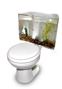 AquariAss: aquarium/toilet