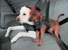 Doggy seat belts